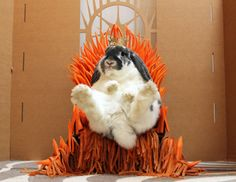 The Carrot Throne!