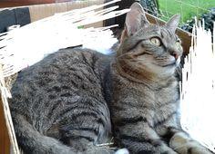 """Zaginął  kot! W niedzielę 10 sierpnia 2014 roku około godz. 13.00 w Parku Śląskim w Chorzowie zaginął kot. Jest to mały """"burasek"""". Wabi się Tygrysio. Kotek ma niebieską uprząż i niebieską smyczkę. Płeć: kocur po kastracji Umaszczenie: szaro-bury pręgowany Wiek: 3 lata Oczy: bursztynowe Informacje dodatkowe: ubrany w niebieską uprząż i niebieską smycz Ktokolwiek widział kotka,proszony jest o kontakt pod nr:  601 848 960 lub 603 353 303.  Na znalazcę czeka 1000 zł nagrody!"""