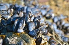 Five Cornish Seaside Foraging Ideas North Cornwall, Fun Days Out, Mussels, Free Food, Seaside, Beaches, Life Is Good, Harvest, Surf