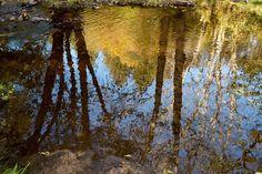 Orange mirror #countryside #leicaq #leica #autumn #automne #reflection #water #nature #forest #bourgogne #morvan #mirror #explore #orange #wander #tree #landscape