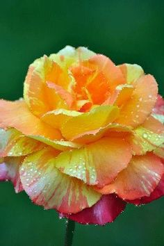Romancing the Rose ~ Such lovely shades of colors. Peach, Yellow Orange, White & Pink.