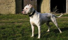 ... pantalla de Dogo | Wallpapers de Dogo | Fondos de escritorio de Dogo
