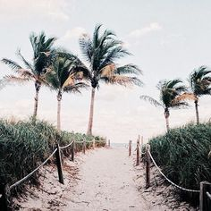 Take yourself to the tropics... instagram @theceaskin