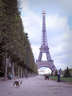 The French Dog by Rachael Hale McKenna. A wonderful book celebrating the Parisian streets and their canine friends. Photos are stunning.