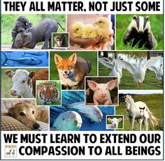 I matter, you matter, they matter... we ALL matter... and we all want to live out our lives free from pain and suffering <3 #MyVeganJournal