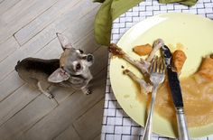 Can't finish your plate? Here's what you should know before you give your dog table scraps.