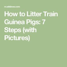 How to Litter Train Guinea Pigs: 7 Steps (with Pictures)
