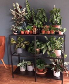 House Plants Decor, Room With Plants, Plant Decor, Indoor Garden, Garden Plants, Indoor Plants, Decoration Plante, Plant Aesthetic, Plants Are Friends