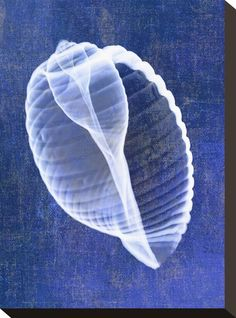 Seashells, Artwork and Prints at Art.com