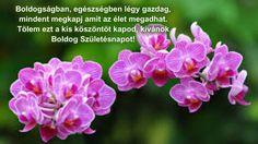 . Happy Brithday, Name Day, Birthday, Plants, Quotes, Thoughts, Pictures, Happy Birthday, Birthdays