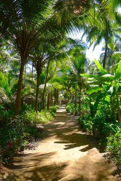 The shady central walkway through the palm grove at Yab Yum resort in north Goa, India. https://www.tripzuki.com/hotels/yab-yum-goa/