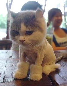 we do this to mookie every summer .. The lion cut