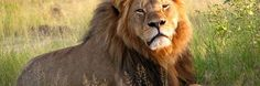 Cecil The Lion Made You A Moron: 5 Stages Of Facebook Rage | Cracked.com
