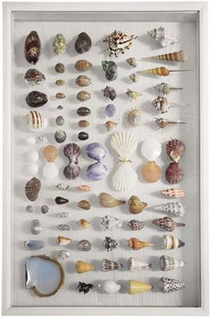 What to do with shells from trips...