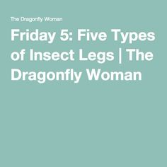 Friday 5: Five Types of Insect Legs | The Dragonfly Woman
