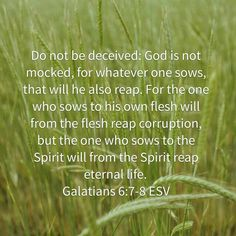 What you sow...