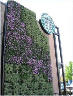 Living wall at Starbucks