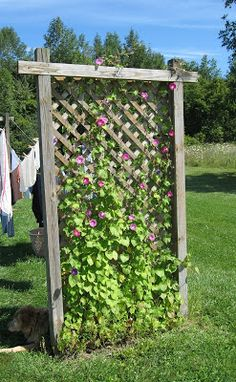 Supermommy  asked about my trellis clothesline, so as I headed out with my basket of laundry to hang, I grabbed the camera as well. Jodie  ...