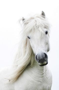 I saw a white horse like this and a small calf hanging out together..it was so sweet, the horse nuzzled the calf.
