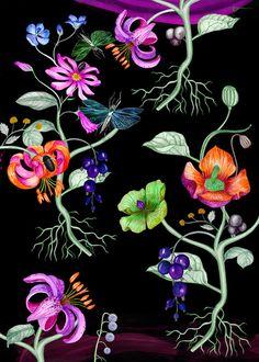 Emma Loftstrom. Botonical illustration