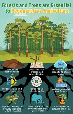 Why Trees & Forests are so Important to Regenerative Agriculture. Agriculture Projects, Agriculture Farming, Permaculture Farming, Soil Conservation, Natural Farming, Sustainable Farming, Sustainable Living, Sustainability, Forest Garden