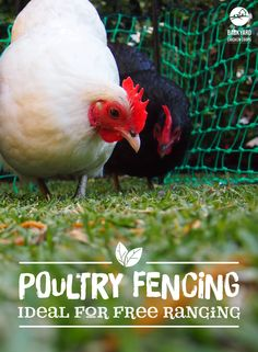 Keep your gardens safe and your girls happy with our our backyard poultry fencing. You can check out this great product here, https://www.backyardchickencoops.com.au/poultry-fencing #loveyourchickens #coopaccessories #poultryfencing