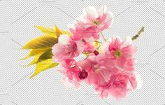 PNG Blossoms of sakura cherry tree Graphics Blossoms of sakura cherry tree isolated on transparent background. Spring flowers1 PNG file 3918 x by LiliGraphie