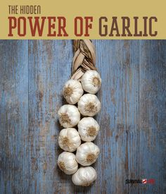 Garlic is the ultimate disease fighting substance by killing bacteria, viruses and parasites. Survival Life is the best source for survival skills and tips.