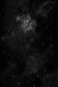 • Black Swan •