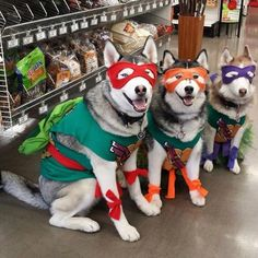 Insanely Cute Dog Halloween Costumes: Teenage Mutant Ninja Turtles | If you're looking for the best dog Halloween costumes, such as dog Halloween costumes DIY, DIY Halloween costumes for dogs, big dog Halloween costumes funny and more! So, if you're in the mood for some easy Halloween costumes for dogs funny, check out these cute Halloween costumes for dogs and funny dog costumes halloween! #doghalloweencostumes #halloweencostumesfordogs #halloweencostumes #dogs… Big Dog Halloween Costumes, Cute Dog Costumes, Easy Halloween, Animals In Costumes, Animals In Clothes, Dogs In Clothes, Dog And Owner Costumes, Large Dog Costumes, Pet Costumes For Dogs