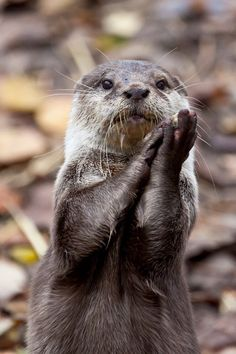 This encouraging cutie who wants everyone to know they're doing a great job. | 33 Times Otters Saved The World Just By Being Adorable