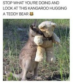 Some Pets Are Truly In Love With Their Stuffed Toys Memes) - They will stea. Some Pets Are Truly In Love With Their Stuffed Toys Memes) - They will steal your heart… - Cute Animal Memes, Animal Jokes, Cute Animal Pictures, Cute Funny Animals, Funny Cute, Funny Pictures, Funniest Pictures, Cute Puppies, Cute Dogs