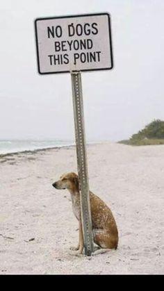 Break the rules, just a little bit. :) #dog #beach