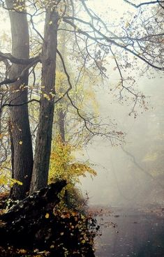Nature | Forest by alyce