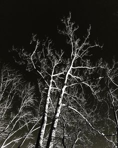#WonderWatch 2015-175 Tree Bones #trees #ArtfulNature #dream #naturephotography #UpperDelawareRiverRegion #WildBeauty #BlackAndWhite #SandyLongPhotos