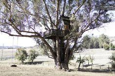 Tree House at Swallowtail Studios Treehouse - Private room · Chileno Valley Road, Petaluma, CA 94952, United States  $175/NIGHT NO MIN STAY
