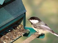 See how many different types of birds you can attract to your own backyard!