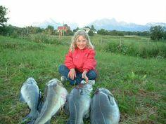 Vera har fisket storsei