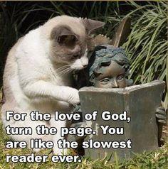 Animal humor, so funny.