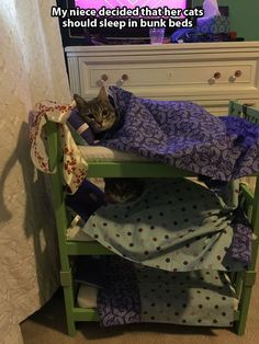 21 Adorable Tucked in Cats | Pleated-Jeans.com