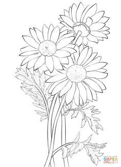 Daisy   Super Coloring