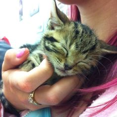 This kitten fell asleep in my friends hand. c: