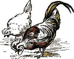 Kyllinger, Høns, Dyr, Gård