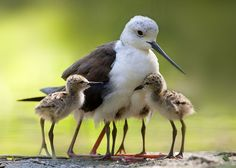 Photograph Family by Stefano Ronchi on 500px