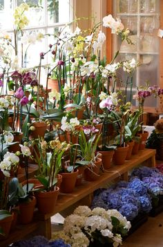 Gorgeous! So many blooming orchids