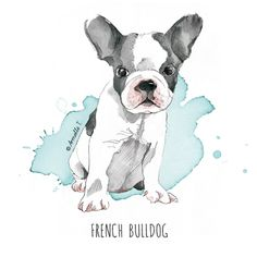 High Quality French Bulldog Breeder located in South Florida. Breeding the finest AKC registered french bulldog puppies in the country, 5 star rated by our customers. Animal Paintings, Animal Drawings, Art Drawings, Watercolor Animals, Watercolor Art, Cãezinhos Bulldog, Bulldog Breeds, French Bulldog Drawing, Images Vintage