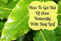 OMG! Getting rid of acne is so easy! Try it for yourself!  Bay Leaf!  #beauty #howtogetridofacne