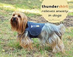 Thundershirt relieve