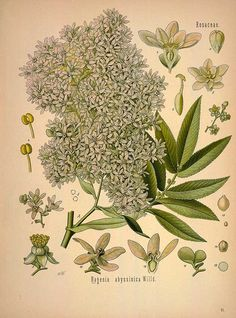 88 Free Vintage Medicinal Plant Illustrations. Fellow botanical illustration lovers, these 88 illustrations have entered the public domain and are now available for your viewing pleasure.