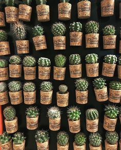 Magazine on Cactus by cactusira :) Cacti And Succulents, Planting Succulents, Cactus Plants, Planting Flowers, Cactus Pot, Cactus Flower, Flower Cafe, Hanging Plants, Indoor Plants